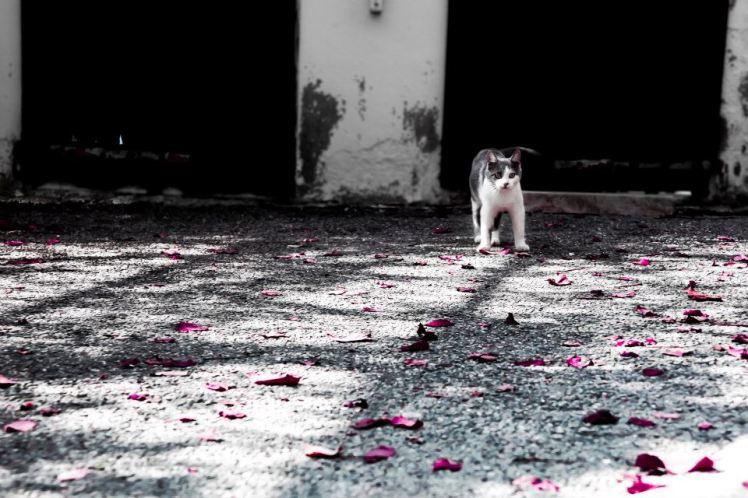 fotografando_scuola_fotografia_veronica_croccia_autunno_2016_pisa_pontedera_montopoli
