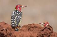 terra_rossa_fotografando_kenya_libro_2017-11