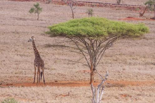 terra_rossa_fotografando_kenya_libro_2017-20