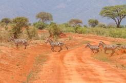 terra_rossa_fotografando_kenya_libro_2017-24