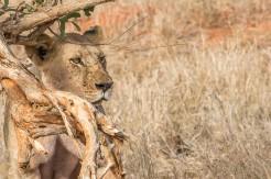 terra_rossa_fotografando_kenya_libro_2017-3