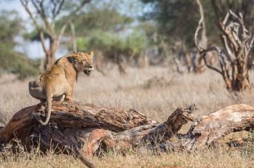 terra_rossa_fotografando_kenya_libro_2017-6