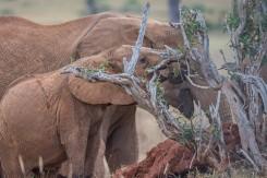terra_rossa_fotografando_kenya_libro_2017-9